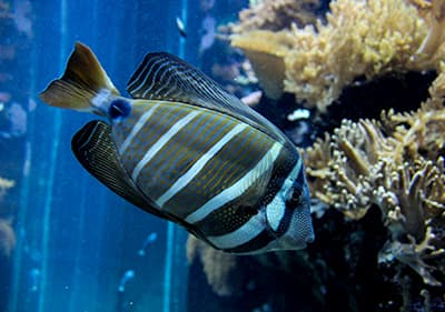 Le deuxième plus grand aquarium d'Europe - Aquarium de Gênes est à visiter en Ligurie
