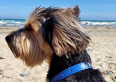 Un chien profite du soleil sur la plage de sable fin en Ligurie