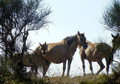 Chevaux mangent l'herbe et profiter du beau temps ligurienne