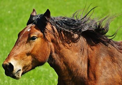 Un beau cheval en Ligurie