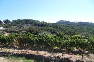 Cascina Praié Viticulteurs à Ligurie
