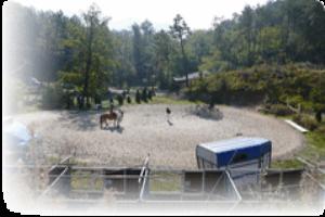 Centro Equestre Framura Écuries à Ligurie