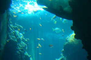 Centro Immersioni Delfino Centres de plongée à Ligurie