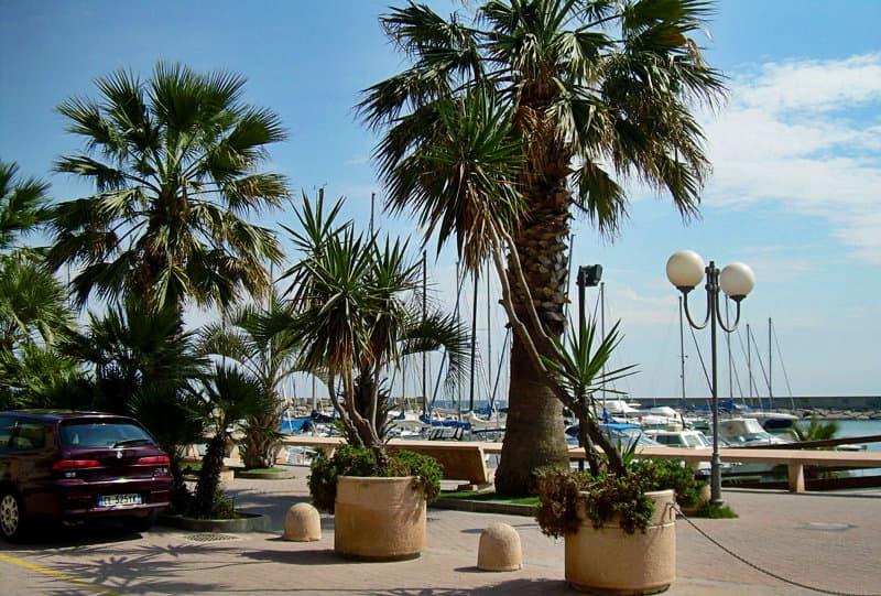 Les palmiers à côté d'un port de San Bartolomeo al Mare