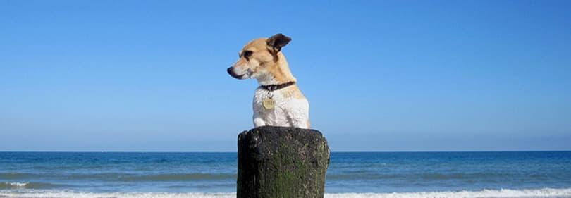 Un chien apprécie la plage en Ligurie