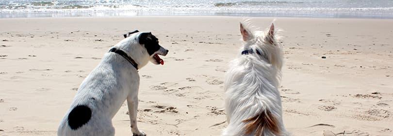 plages de chien dans la province d'Imperia