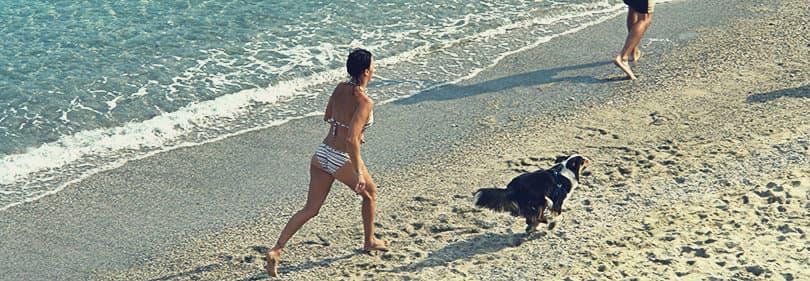 Le propriétaire joue avec son chien dans Albisola