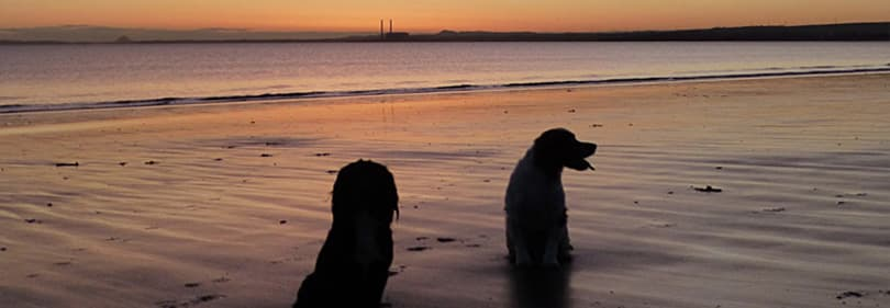 Deux chiens à la plage en Ligurie