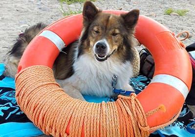 Un chien est à la plage en Ligurie