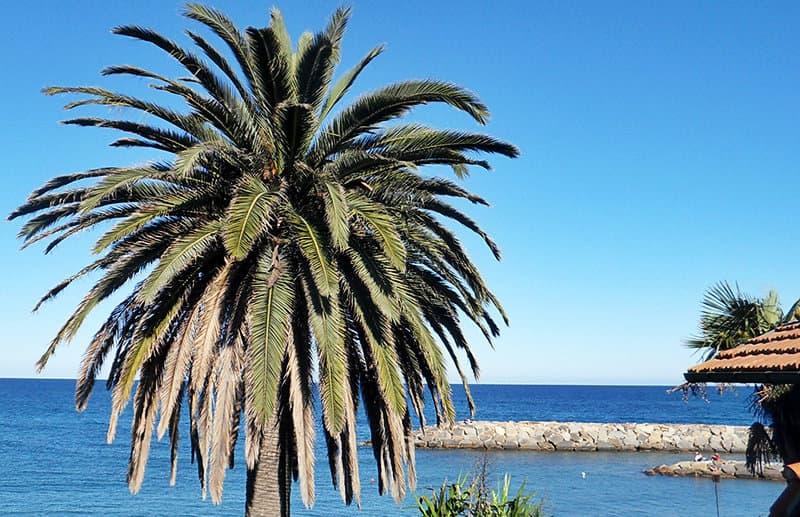 Un palmier à côté de la mer à San Lorenzo al Mare