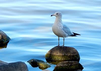 A Seagull est debout sur un rocher en Ligurie