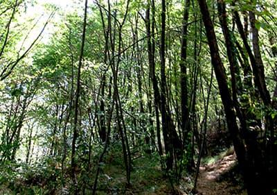 Une forêt en Ligurie