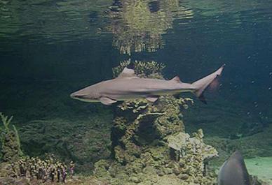 Le deuxième plus grand aquarium en Europe située à Gênes mérite une visite