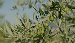 Goutez à l'huile d'olive de Ligurie et d'autres spécialités locales